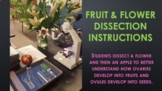 Flower and Fruit Dissection Labs