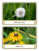 Flower and Seed Matching - Free Version