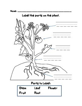 Parts of Plants - Learning about stems, roots, leaves, and flowers