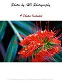 9 Pictures of Flowers