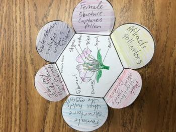 Flower structure foldable vocab