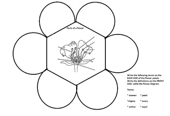 Flower structure foldable vocab