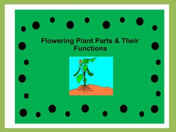 Flowering Plant Parts & Their Functions Including Photosynthesis