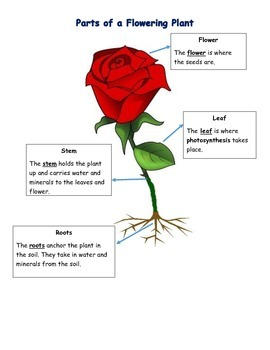 Flowering Plant Study Guide With Pictures