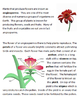 Flowering Plants - Angiosperms