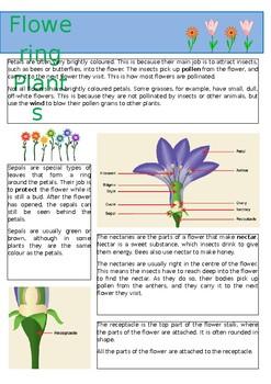 Flowering Plants Information Sheet