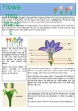 Flowering Plants Information Sheet