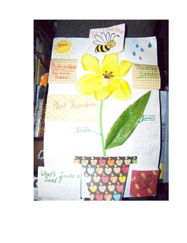 Flowering Plants Lap Book by Linda Boyd