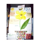 Flowering Plants Lap Book by Linda Boyd