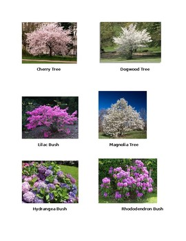 Flowering Trees and Bushes