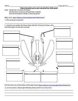 Flowering plant parts & reproduction web-quest Enrichment or review