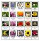 Flowers 1 Crossword Puzzles