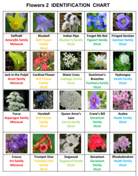 Flowers 1 Word Search