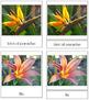 Flowers: 3-Part Cards (Set 2)