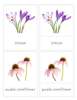 Flowers 3-Part Nomenclature Cards- Montessori