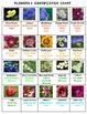 Flowers Bingo Volume 3