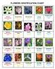 Flowers Bingo Volume 1