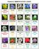Flowers Bingo Volume 2