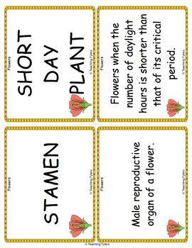Flowers Vocabulary Cards