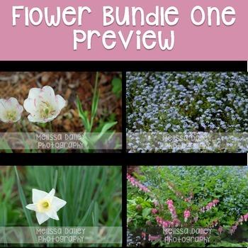 Flowers Bundle {12 Photos}