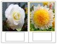 Flowers:Colour Matching and  Partial Miniatures - 4 sets ( Extension Cards)