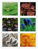 Flowers:Colour Matching and  Partial Miniatures - 4 sets (