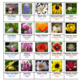Flowers Crossword Puzzles -- Vol. 1