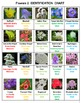 Flowers Crossword Puzzles Vol. 2