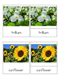 Flowers - Montessori 3-Part Cards