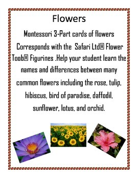 Flowers - Montessori 3 - Part cards