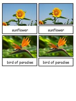 Flowers Montessori 3-part cards--Safari Toob Flowers