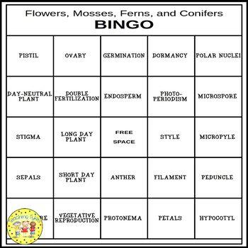 Flowers, Mosses, Ferns, and Conifers BINGO