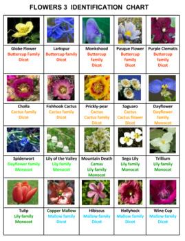 Flowers Photo Safari Game 3