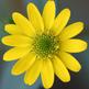 Flowers Photos