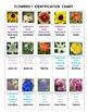 Flowers Pictominoes  Volume 1