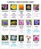Flowers Pictominoes  Volume 2