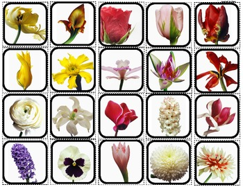"""Flowers"" Picture Matching/Flashcards/Memory Game for Autism"
