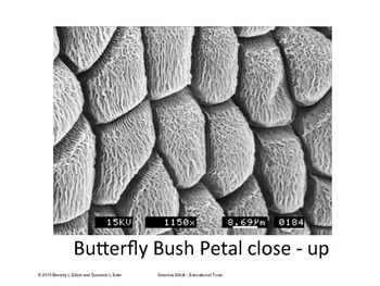 Flowers, Pollen, and Art with SEM Images for Posters and E-Book - STEM