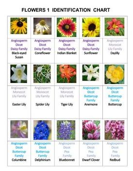 Flowers Rummy Volume 1