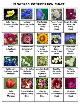 Flowers Rummy Volume 3