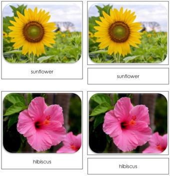 Flowers Safari Toob Cards - Montessori