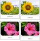 Flower Safari Toob Cards - Montessori
