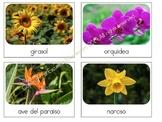 Flowers Safari Toob Cards in Spanish & English (Montessori)
