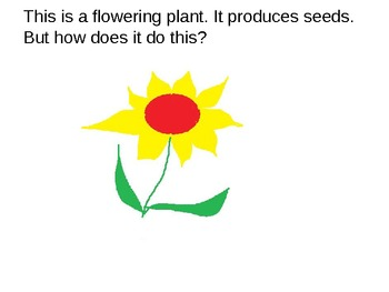 Parts of the Flower..Science, Differentiated...Simple Language, Complex Ideas