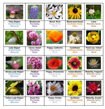 Flowers Sorting Game Volume 1