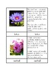 Flowers - Three/Four Part Cards