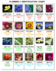 Flowers Word Search Puzzles -- Set 3