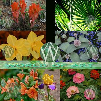Flowers and Green Plants Mega Bundle plus Wild Flowers