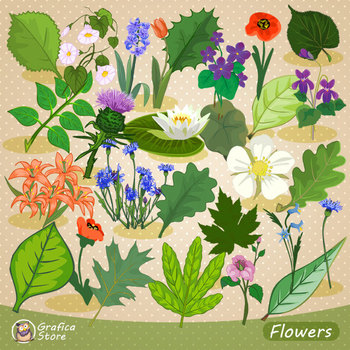 Flowers and Leaves Collection, Colorful Flower Clipart