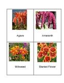 Flowers of Florida Nomenclature Cards